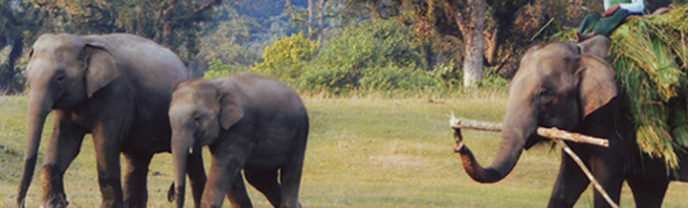 Chitwan National Park, Safari in Nepal Terai, Wildlife and Elephant back safari in chitwan