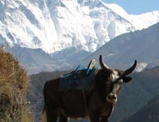 Nepal, Mt. Everest region, Everest trekking, lukla-namchebazzar